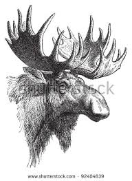 moose antlers stock images royalty free images u0026 vectors