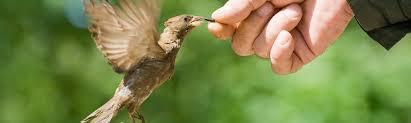 Backyard Wild Birds February Is National Bird Feeding Month U2013 Backyard Birds The