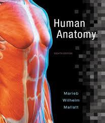Human Anatomy Pdf Books Free Download Marieb Wilhelm U0026 Mallatt Human Anatomy 8th Edition