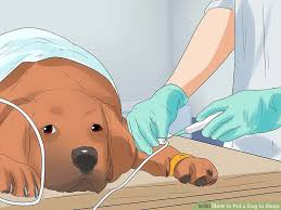 put dog to sleep how to put a dog to sleep 7 steps with pictures wikihow
