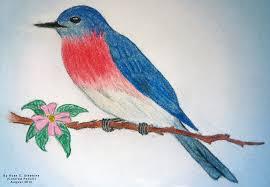 drawn bird color pencil and in color drawn bird color