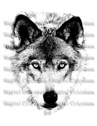 wolf face wolf png animal png wolf prints wolf image