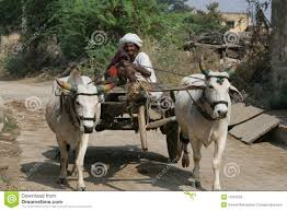 indian cart bullock cart india editorial stock photo image 11057033