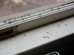 Small Ants With Wings In Bathroom Blog Termite U0026 Pest Control Tampa Fl Part 3
