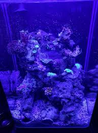 Reef Aquarium Lighting The Nantucket A 2 Gallon Reef Tank 9 Steps With Pictures