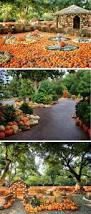 144 best autumn at the arboretum images on pinterest dallas