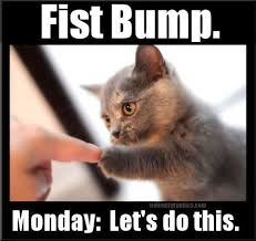 Funny Monday Meme - it s monday let s do this the paws life