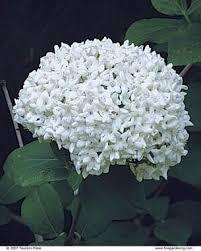 Indoor Fragrant Plants - pick plants for fragrance fine gardening