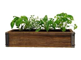 indoor herb garden kits to grow herbs indoors hgtv