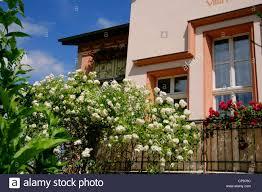 Bad Freienwalde Alte Villa Im Jugendstil Mit Rosen Auf Dem Balkon Deutschland