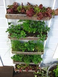container gardening ideas reuse spice rack as a container garden