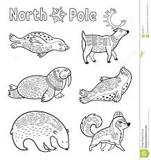 outline arctic animals set for coloring page stock vector image