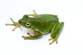 frog white background images all white background