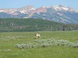 Montana Ranches For Sale Otter Buttes Ranch by 425 Best Hunting U0026 Fishing Properties For Sale Images On Pinterest