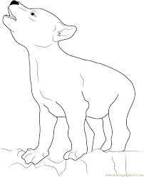 wolf coyote coloring page free coyote coloring pages