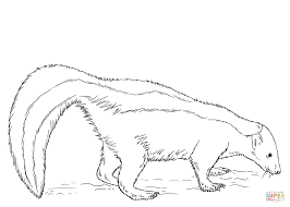 skunk coloring page free printable coloring pages