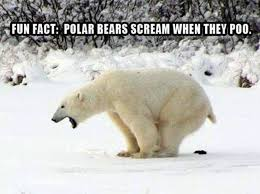 Polar Bear Meme - fun fact about polar bears meme http jokideo com fun fact