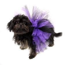 affenpinscher reviews black purple tulle dog tutu by pawpatu with same day shipping