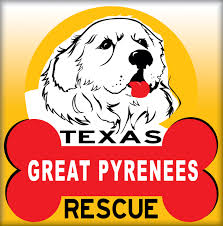 great pyrenees rescue provides wonderful dogs to good homes texas great pyrenees rescue needs people who want to foster and or