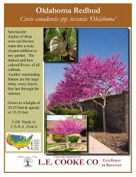 actually for the front yard always wanted a redbud oklahoma s