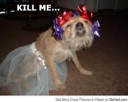 Please Kill Me Meme - dog wants to escape kill me know your meme