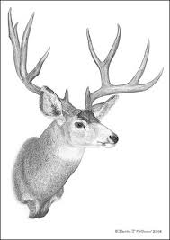 deer drawing best images collections hd for gadget windows mac