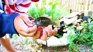mini backyard pond fishing youtube