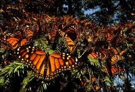wings of life disneynature
