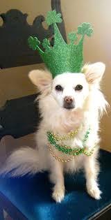 16 best st patrick u0027s day pets images on pinterest dog stuff st