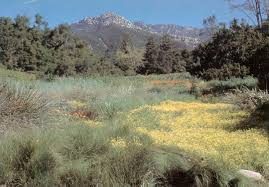 Botanic Garden Santa Barbara Pacific Horticulture Society Santa Barbara Botanic Garden