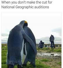 Penguin Memes - pin by b t on penguins pinterest penguins animal humour and animal