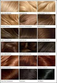 light golden brown hair color chart fall in love with hair color chart colour chart hair coloring and