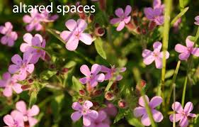 Names Of Purple by Types Of Purple Flowers With 5 Petals Admissions Guide Flower
