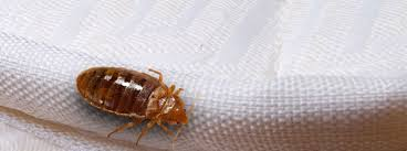 Bed Bug Com Commercial Bed Bug Control Bed Bug Removal And Treatment Hulett