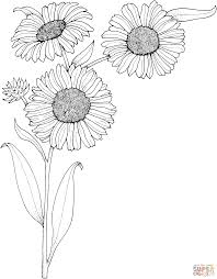 colouring sheets coloring pages sunflower flowers for kids free