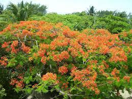 Home Story 2 by Tropical Island Home 2 Story 2 Bath Roof Top Veranda Flower