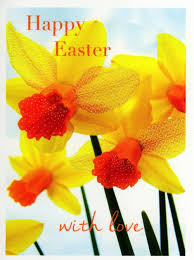easter greeting cards pack of 5 daffodil happy easter greetings cards cards kates