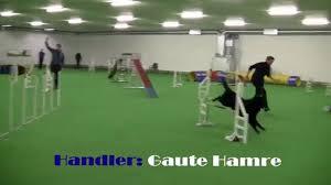 belgian sheepdog agility agility u0026 agility jumping 3 large belgian groenendael shepherd