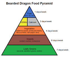 bearded dragon lighting guide bearded dragon food pyramid complete critter
