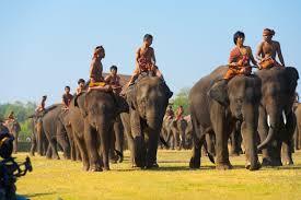 surin elephant roundup parade u2013 surin thailand world festival