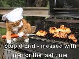 Bbq Meme - bbq birds cats know your meme