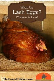 1758 best chickens images on pinterest raising chickens