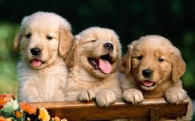cute dog wallpapers cute dogs wallpapers hd group 96