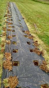 best 25 strawberry patch ideas on pinterest veggie gardens