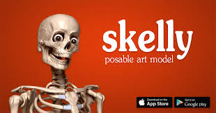 posable skeleton skelly poseable anatomy model for artists proko