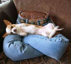 Cats In Dog Beds Leggy Pet Beds Pet Beds Repurposed And Luxury Pet Beds
