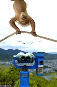 freaky monkey hanging from a at a lookout pictures freaking