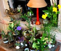 indoor plants ozziesterrariums