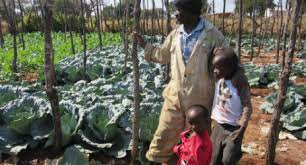 with my vegetable garden i am now able to support my family u201d ifrc