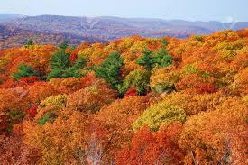 New York forest images Panorama of autumn forest in bear mountain state park new york jpg